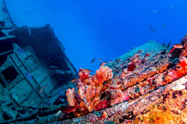 20 de fotografii deosebite cu viata subacvatica