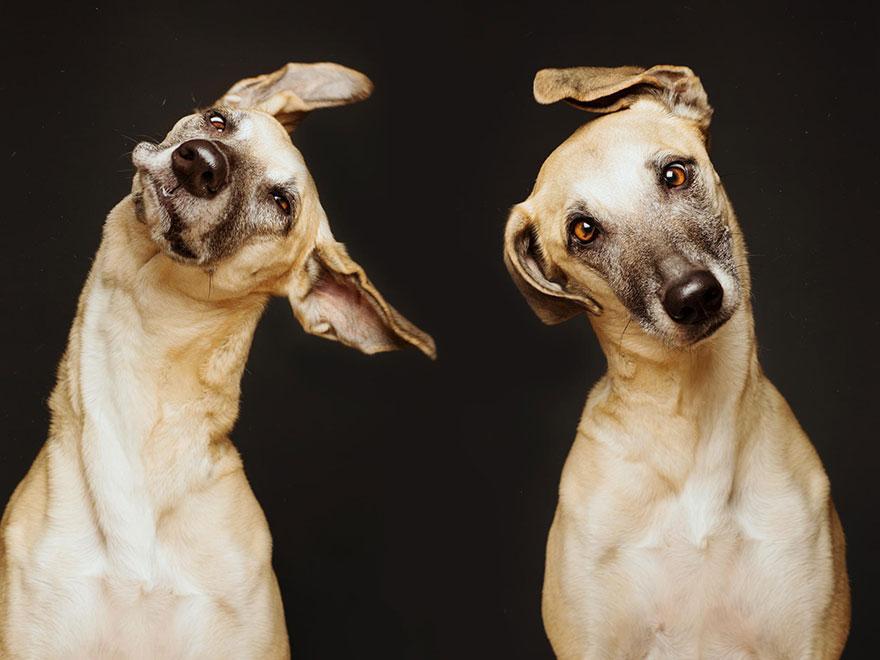 Poza zilei: Portrete de caini, fotografii facute de Elke Vogelsang