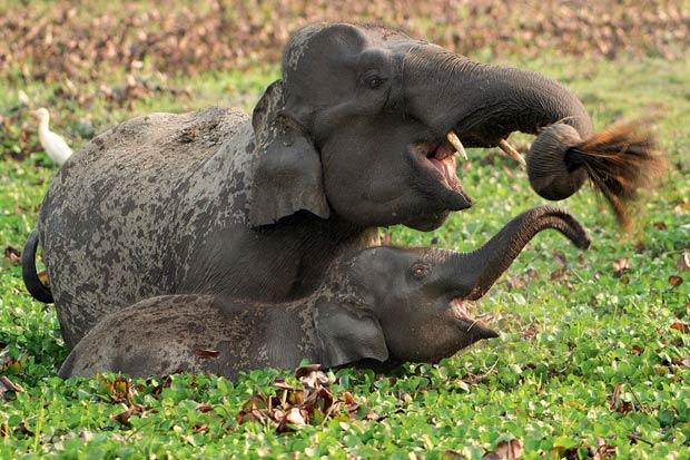 Poza zilei: Mama si puiul la joaca, fotografie realizata de Sandesh Kadur