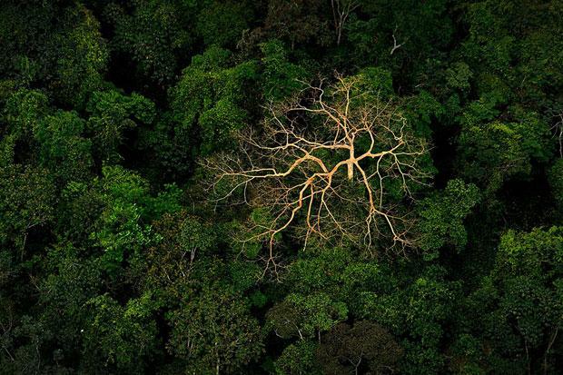 Poza zilei: Acoperisul junglei, fotografie realizata de Jeremy Lock