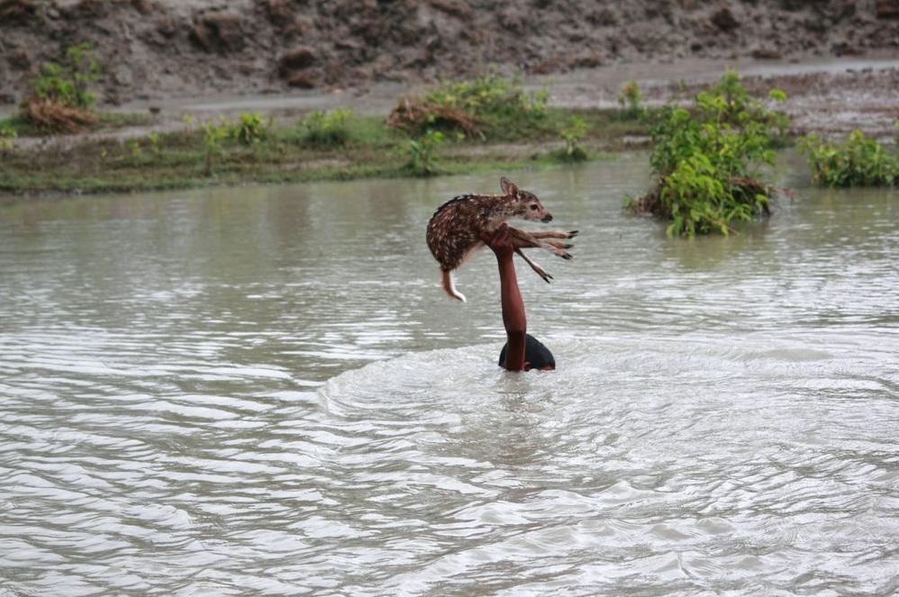 Poza zilei: Puiul de cerb si baiatul, fotografie realizata de hasib wahab